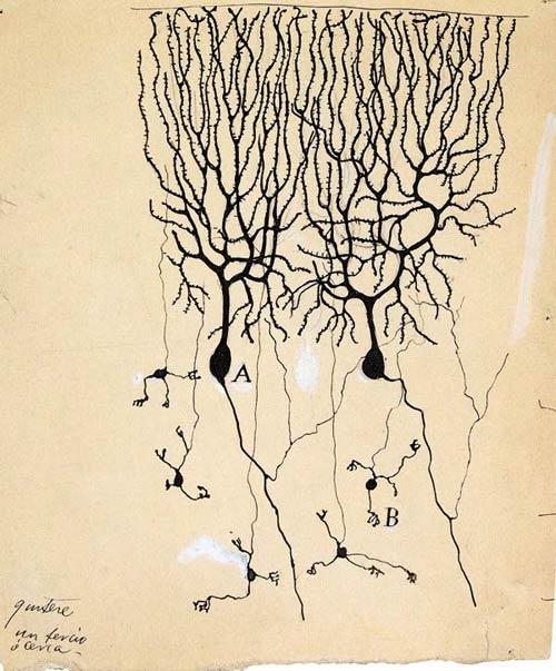 1899 neurons