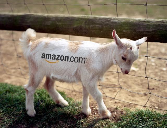 Amazon Goats