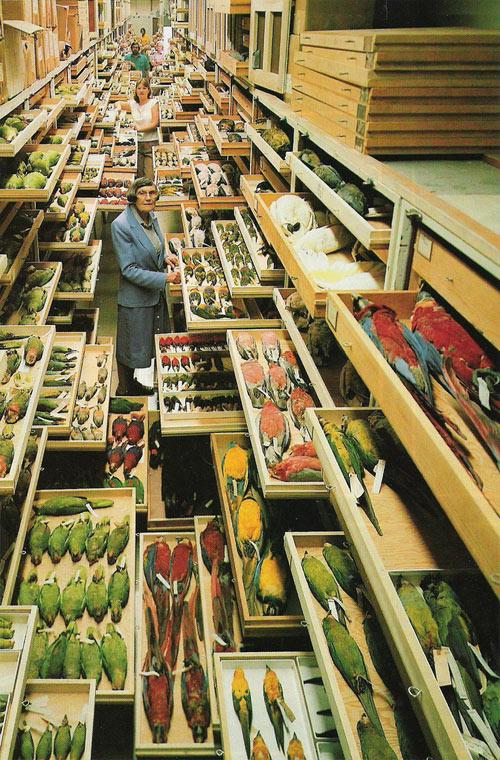 NMNH backroom