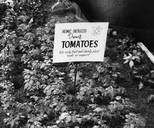 Atomic tomatoes