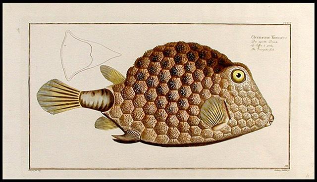 Bloch Fish