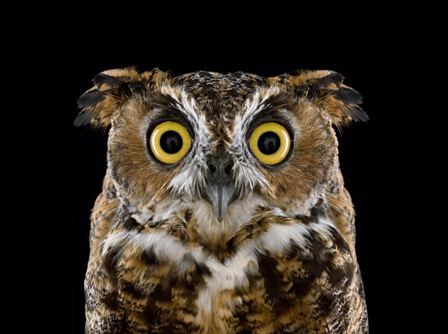 Cat Eye Vs Owl Eye