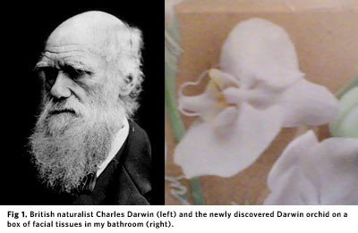 Charles Darwin and his orchid