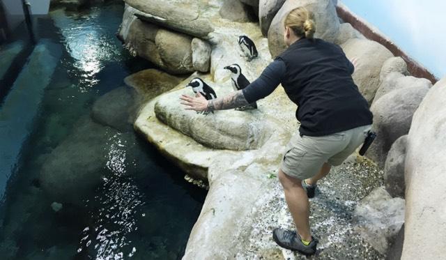 Jurassic Zoo