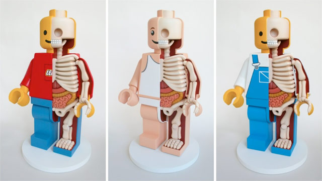 Lego Anatomy