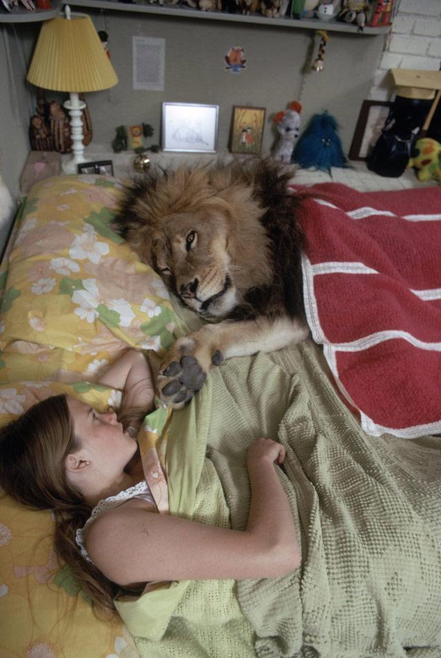 Lion Home