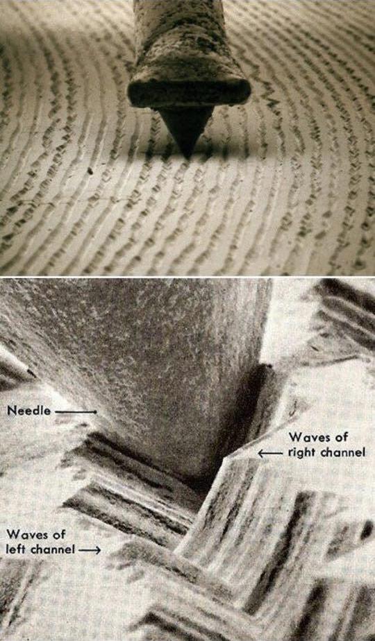Microscope Vinyl