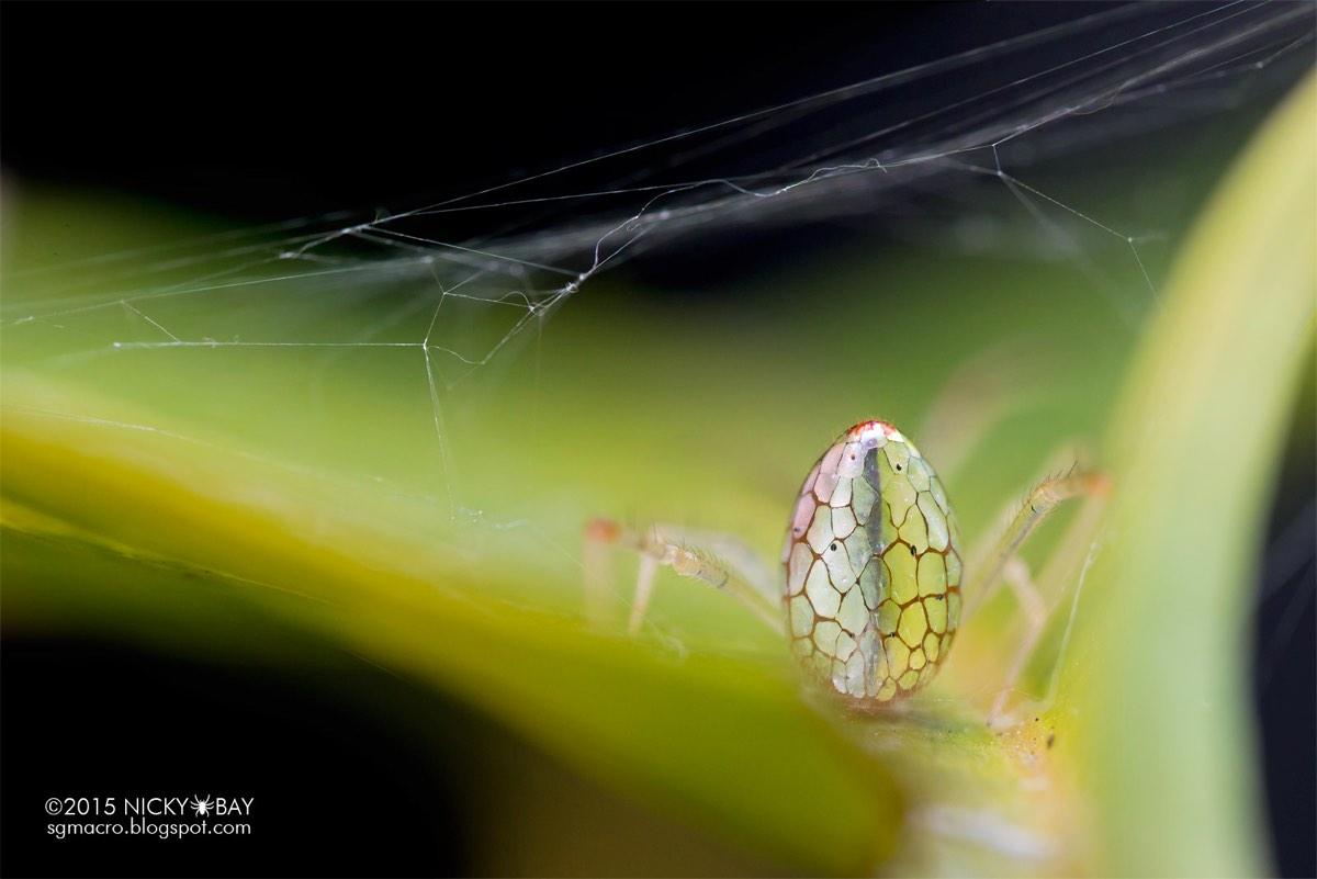 Mirror Spider