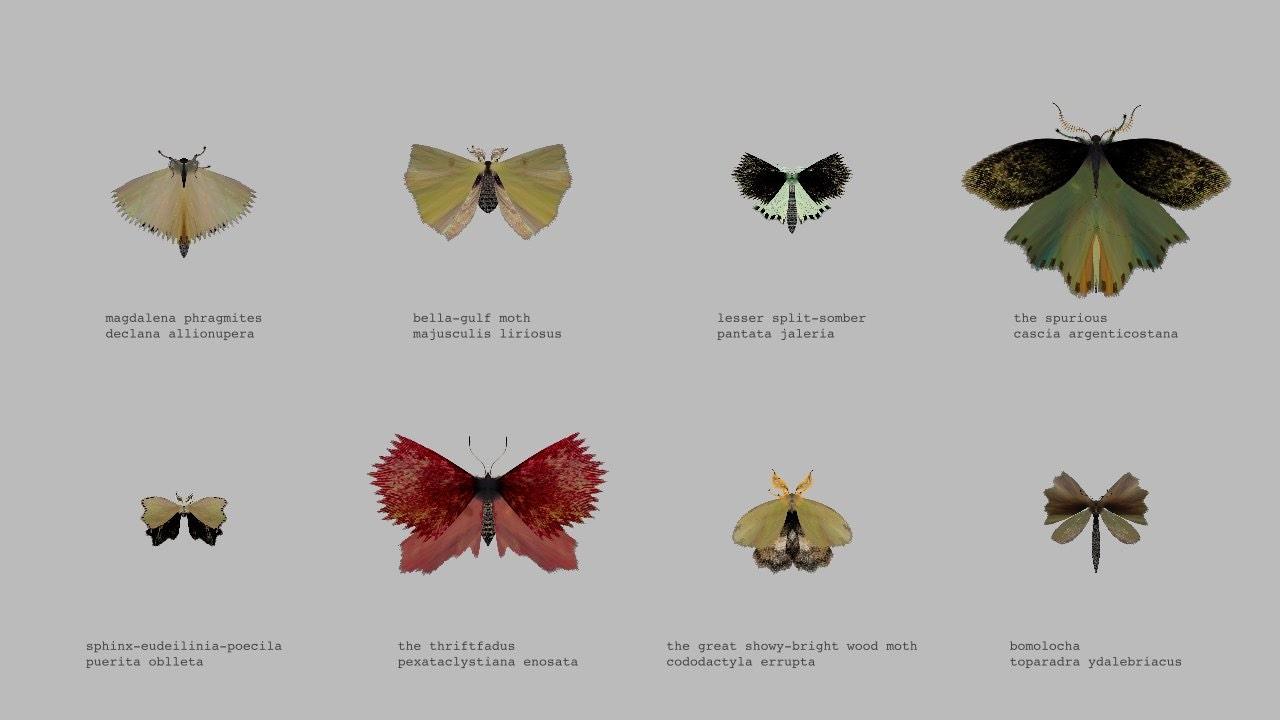 Moth Generator