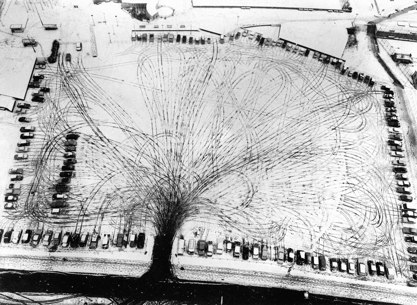 Parking Lot Tree