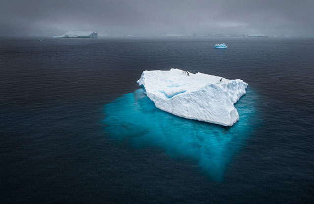 Penguin Iceberg