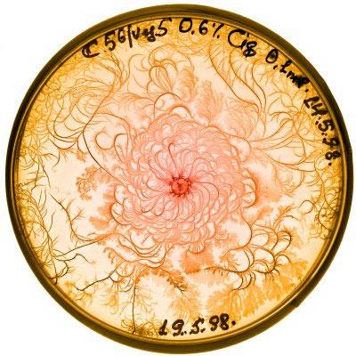 Petri fractals
