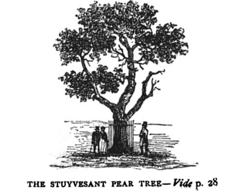 Stuyvesant pear tree