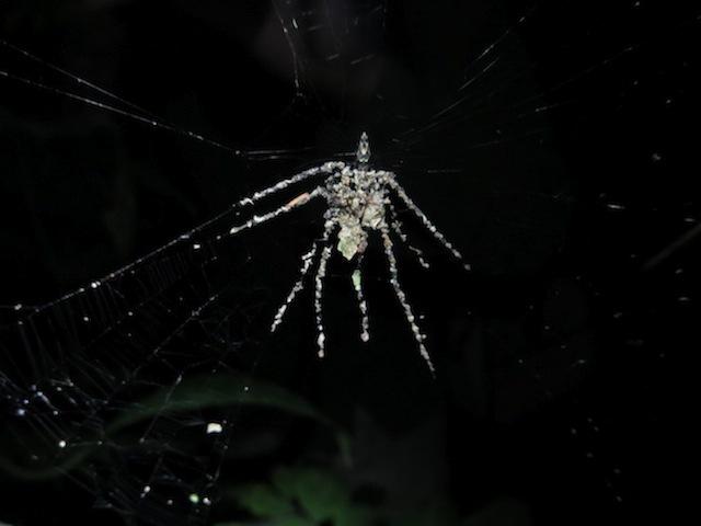 super-spider.jpg