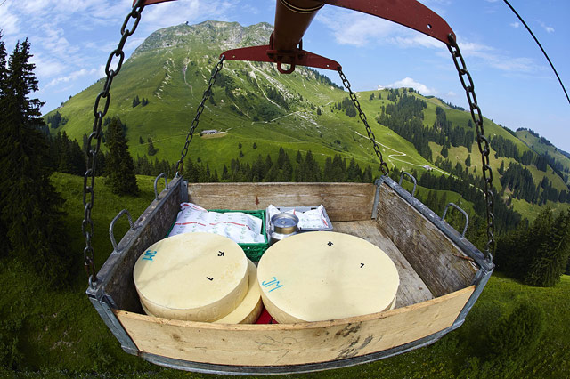 Swiss Cheese Journey