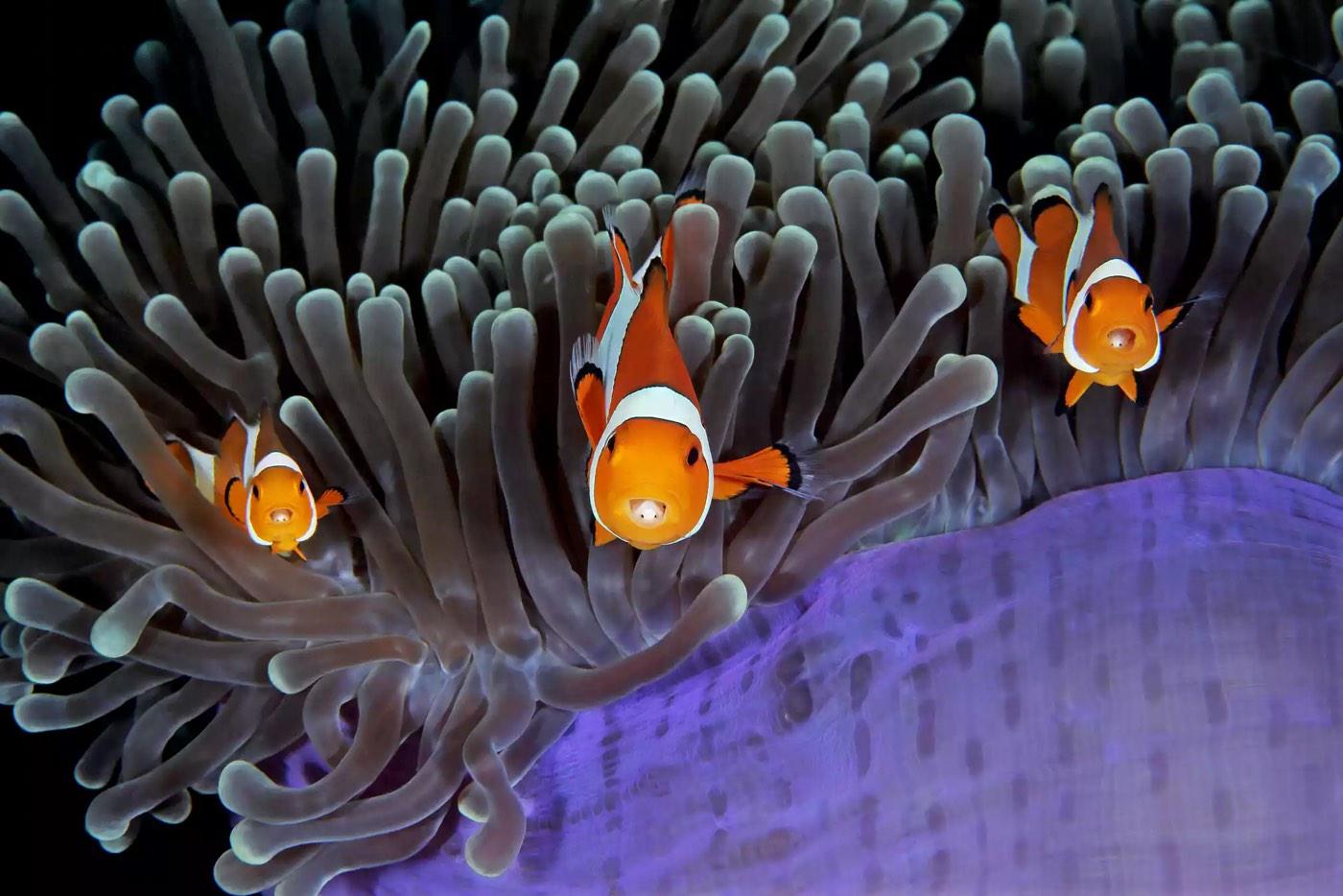 Underwater 2017