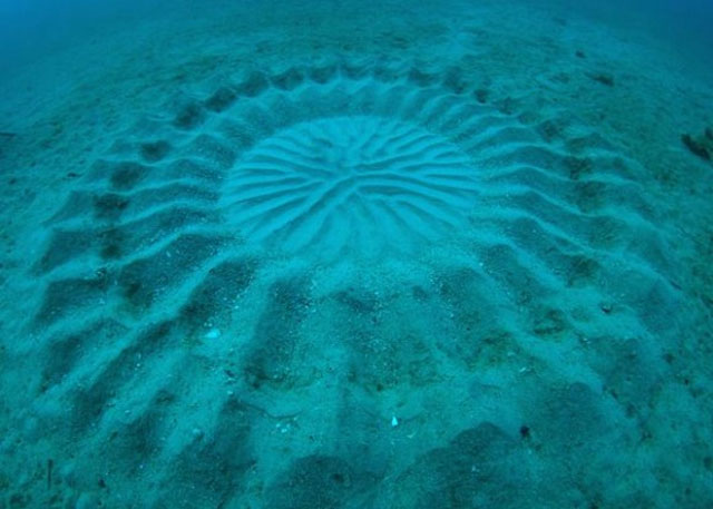 Underwater Crop Circle