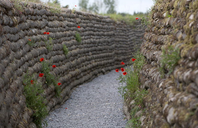 WWI Poppies