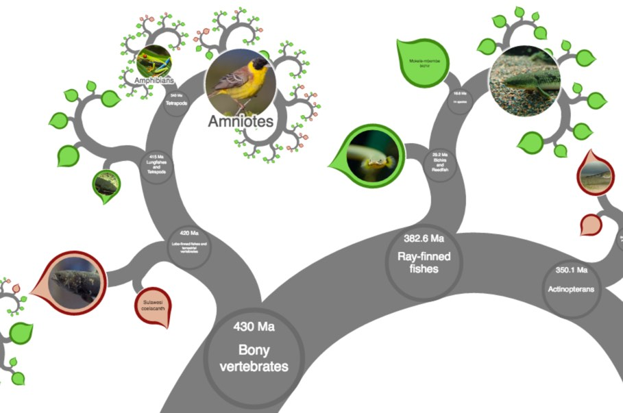 http://kottke.org/16/10/zoomable-tree-of-all-life-on-earth