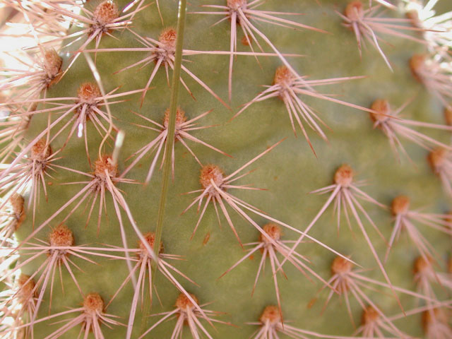 the business end of a cactus